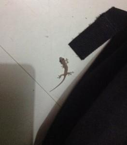lizard7